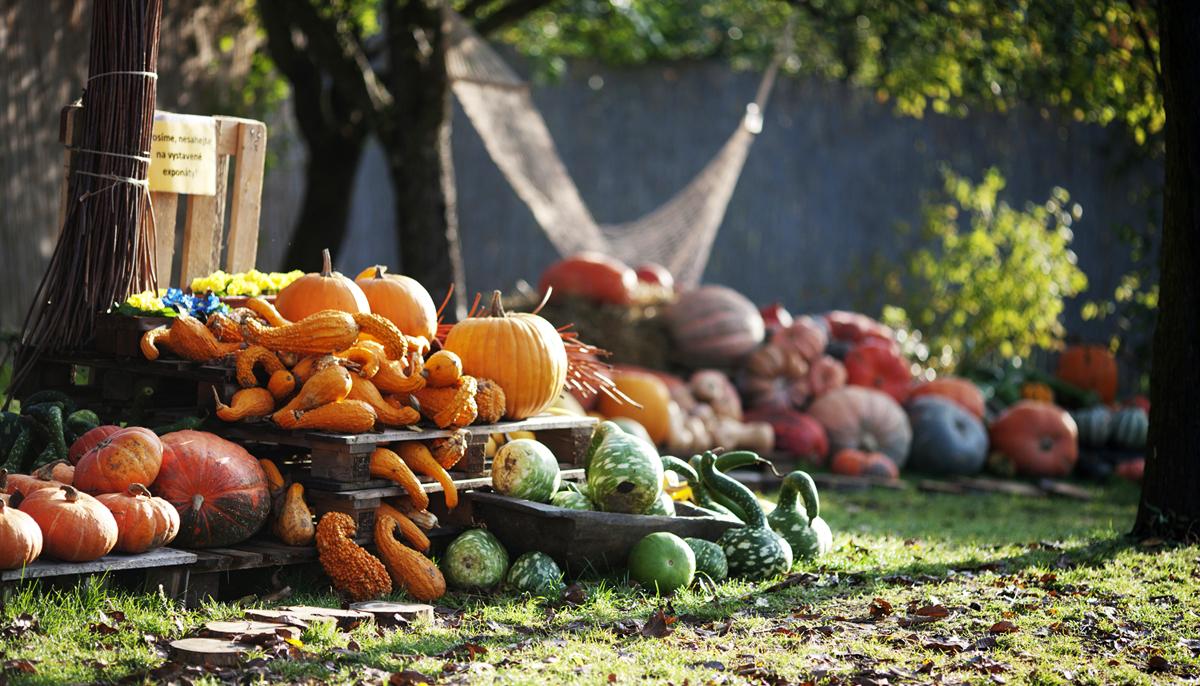 Dýně a Halloween v Botanické zahradě