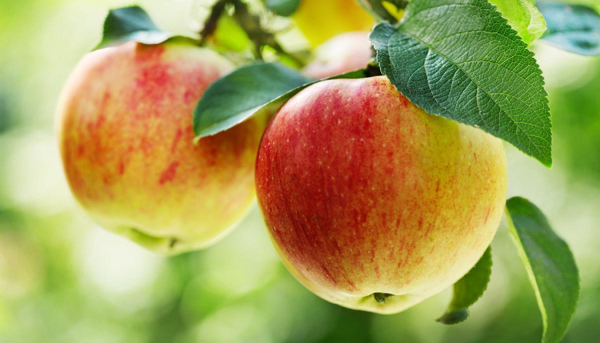 Jedno jablko denně je nejlepší lékař
