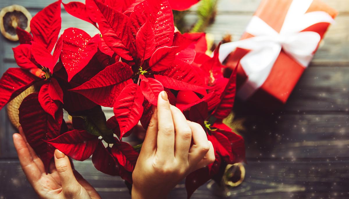 Hvězdné přivítání vánočních svátků