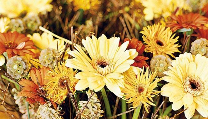 Květinová energie v odstínech žluté a oranžové