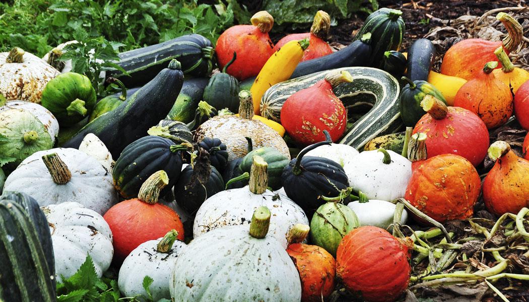 Pěstování zeleniny v ekozahradě
