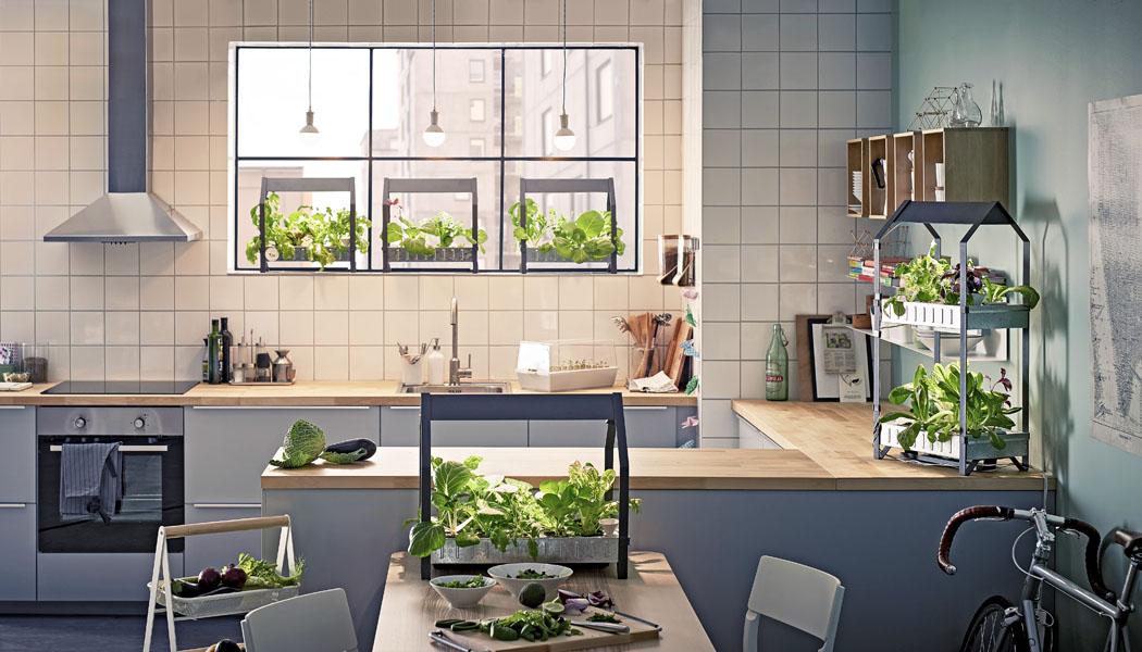 Hydroponie: Bylinky z vlastní kuchyně