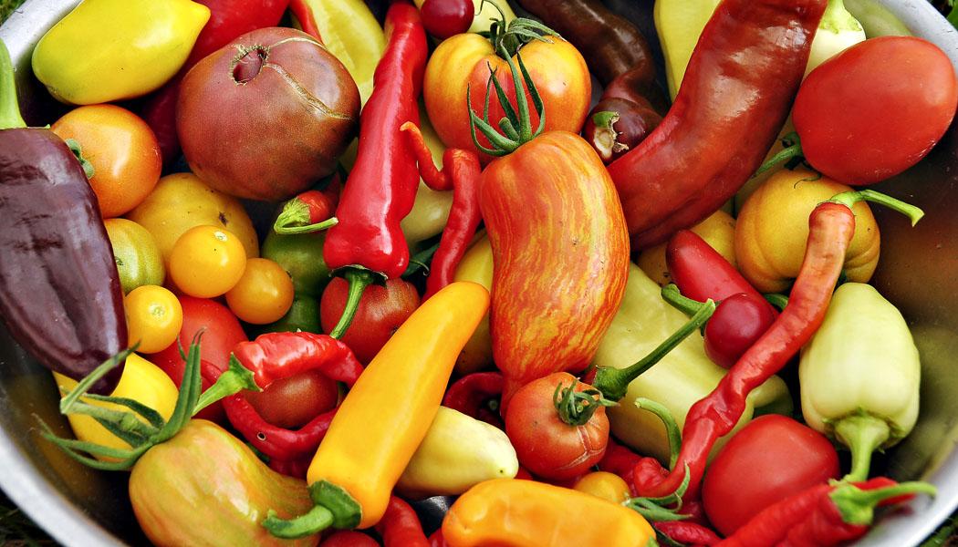 Papriková a rajčatová rozmanitost