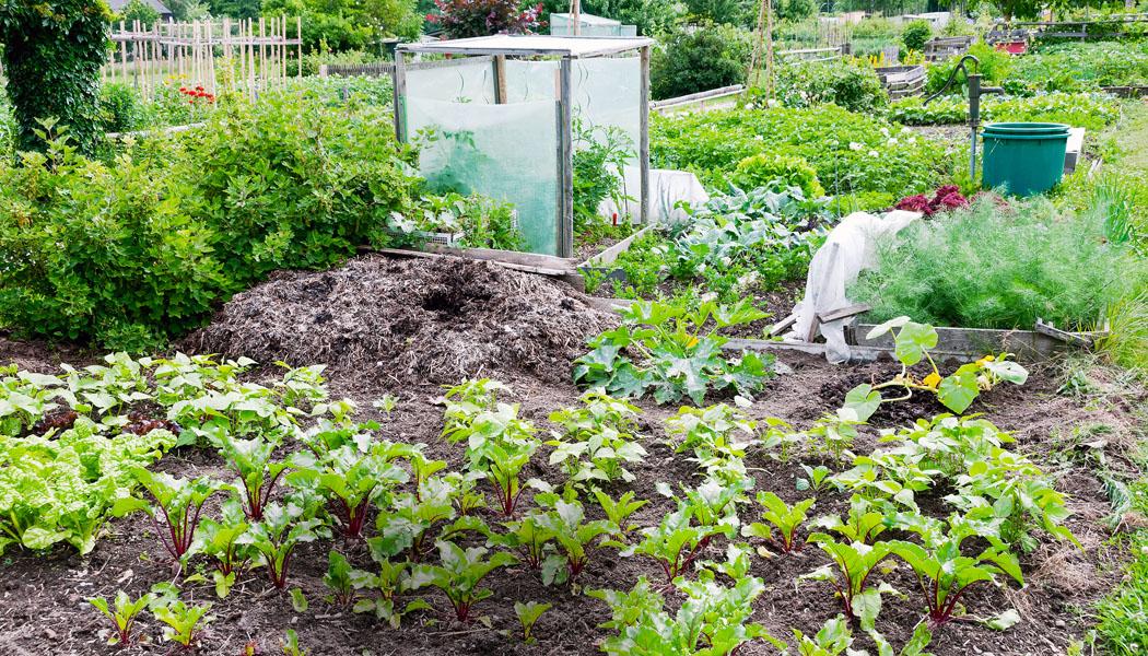 Výprava za čerstvou zeleninou
