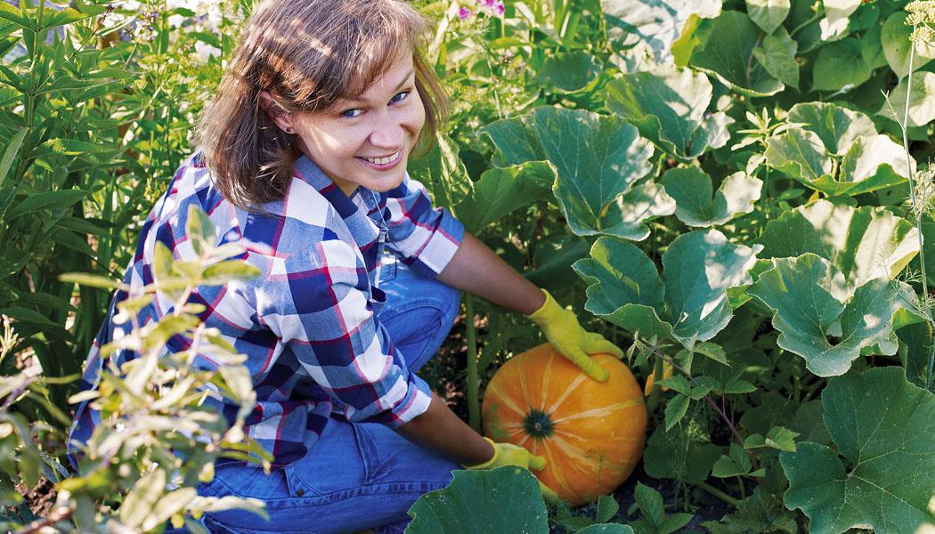 Tykvovití giganti ve vaší zahradě