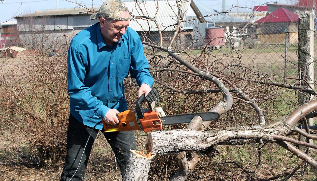 PORADNA: Problém s kácením stromů