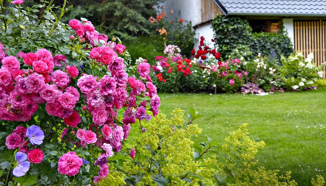 20x krása růží jako sázka na jistotu