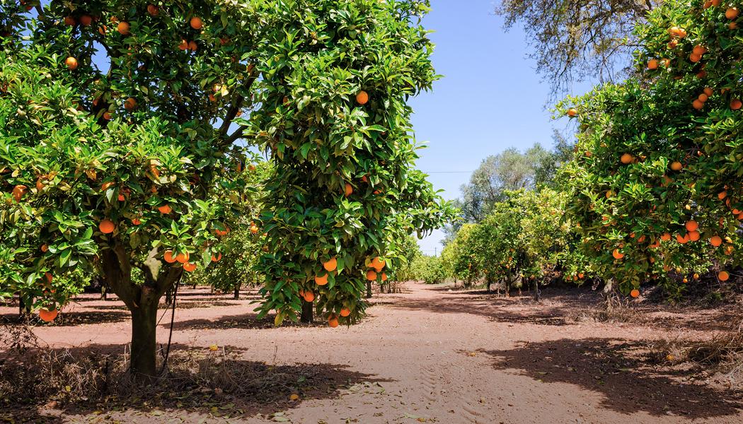 Odborník radí: Jak na zdravé broskvoně a meruňky