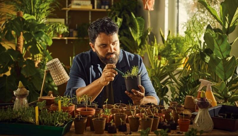 Pokojové rostliny: pro zdraví i relaxaci