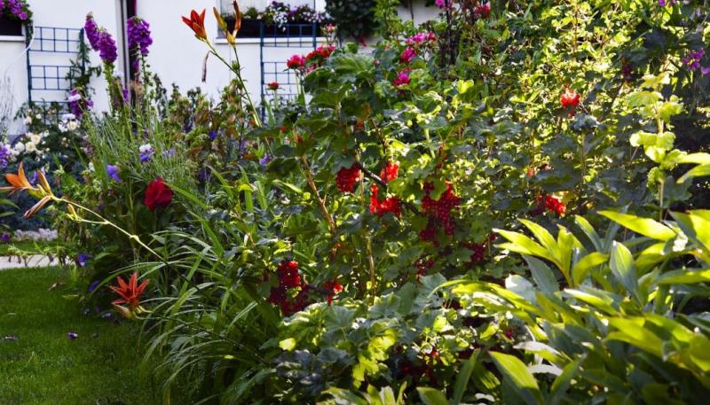 Drobné ovoce oživí každou zahradu